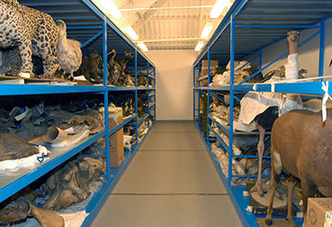 Museum Archive Shelving